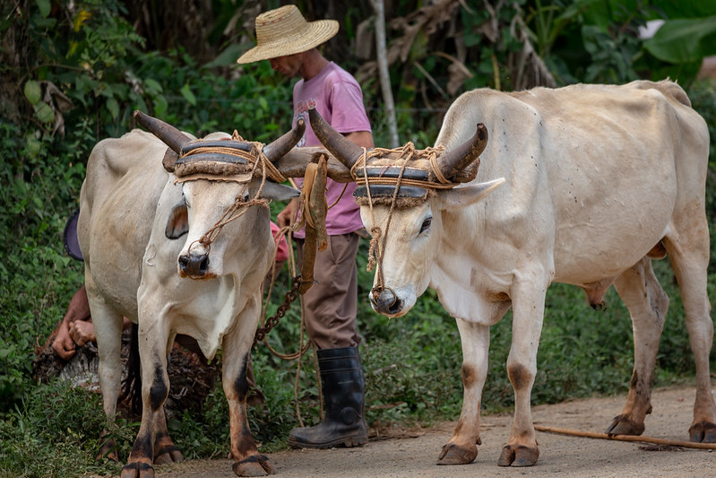 Kuba verabschiedet Tierschutzgesetz
